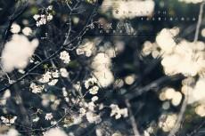 flower636ka_rin_913
