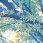 【高解像度】色づき始める枝(3パターン)