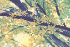 flower656-2