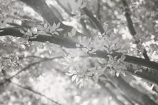 flower656-3