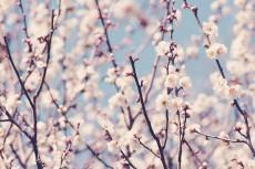 flower663-2