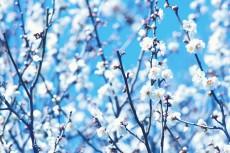 flower663