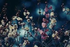 flower664-2