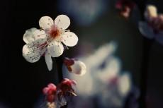 flower665-2
