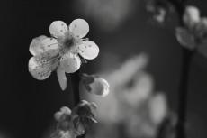flower665-3
