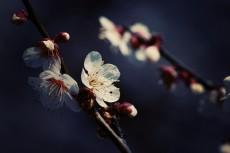 flower666-2