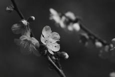 flower666-3