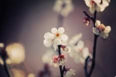 flower667-2