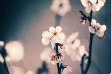 flower667