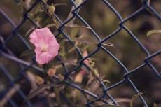 flower668-2