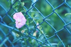 flower668