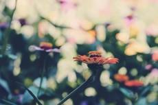 flower670-2