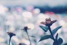 flower671-3
