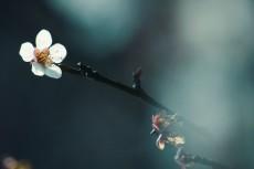 flower672-2