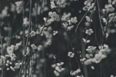 flower673-3