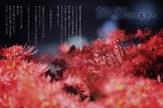 flower597-sanju_uroku