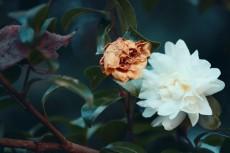 flower674-2