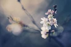flower675-2