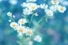 flower677-2