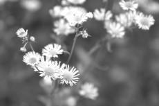 flower677-3