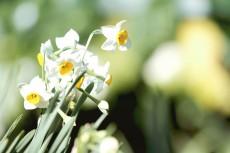 flower681-2