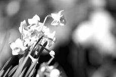 flower681-3