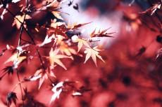 flower682-2