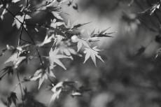 flower682-3