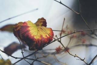 【高解像度】侵食されるように色づく葉(3パターン)