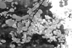 flower687-3