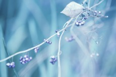 flower688-2