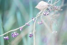 flower688