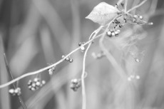 flower688-3