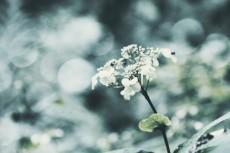 flower689-2