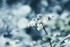flower689