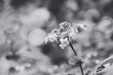 flower689-3