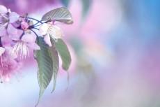 flower690-2