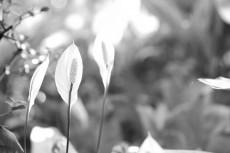 flower691-3