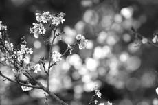 flower692-3
