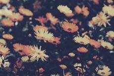 flower696-2