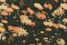 flower696