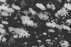 flower696-3