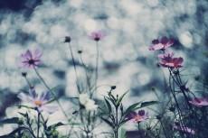 flower697-2