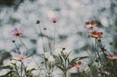 flower697