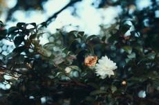 flower699-2