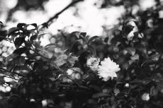flower699-3