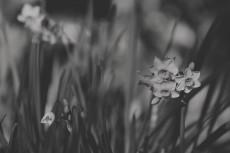 flower704-3