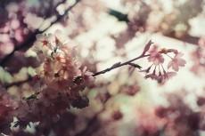 flower705-2