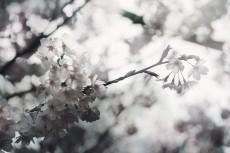 flower705-3