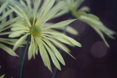 flower707-2